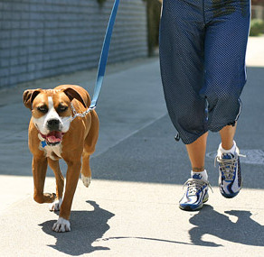 WEIGHT LOSS FOR DOGS
