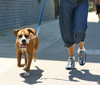 According to veterinarian surveys; 50% of dogs are overweight in the USA.