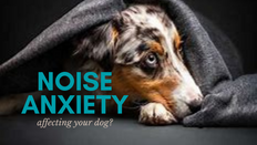 Is Noise Anxiety Affecting you Dog?