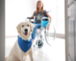 Cute service dog and blurred girl in whe