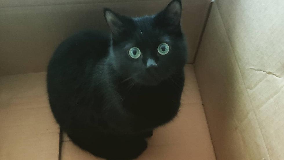 cat mix raw cat food