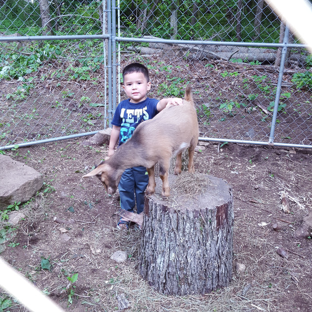 Elijah with one of our goats