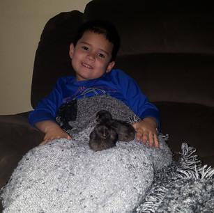 The chicks love to snuggle on Elijah's lap!