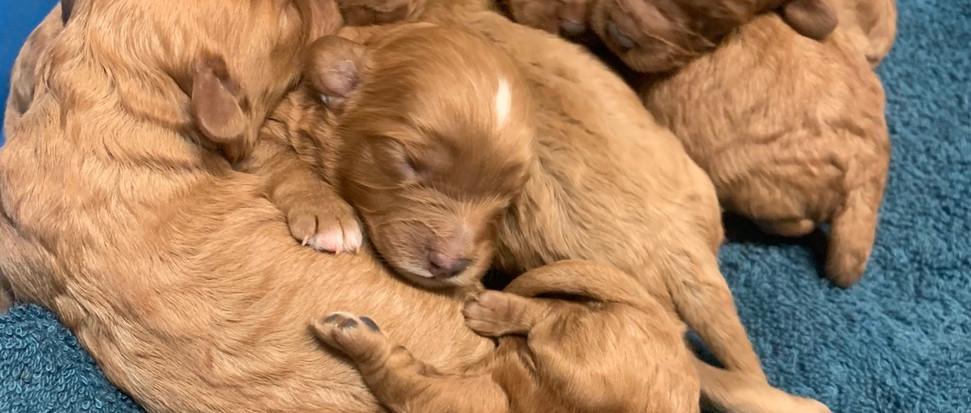 8 beautiful babies