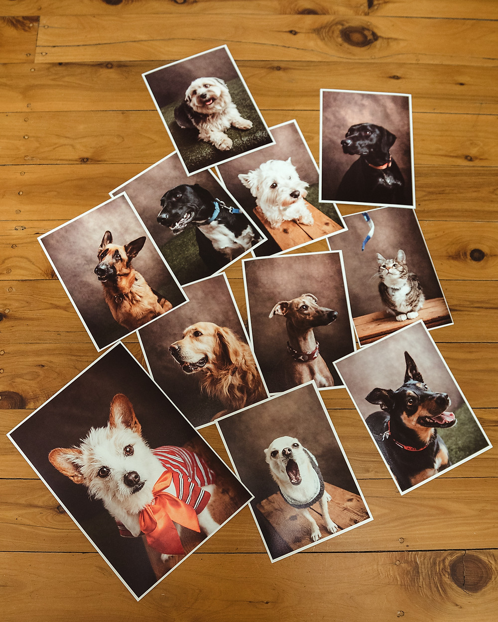 Pet portrait prints by de lumiere photography