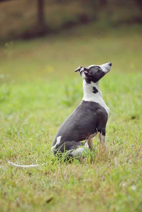 sydney pet photographer