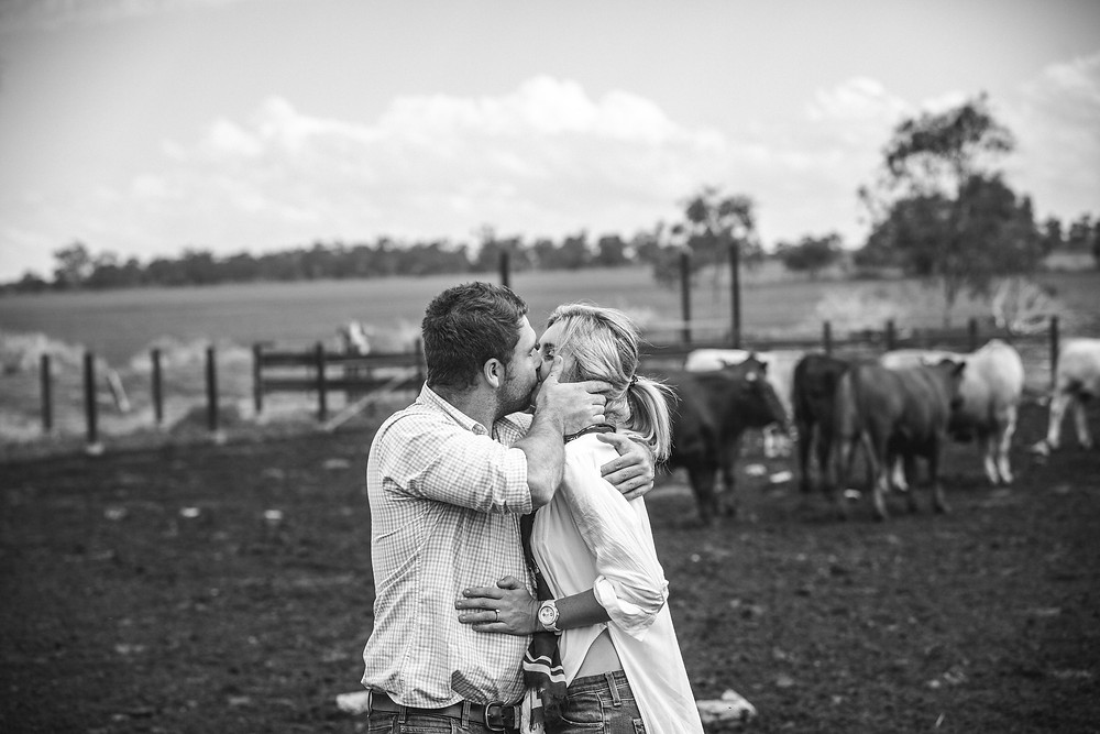 couple kissing on farm with cows in background sydney wedding photographer