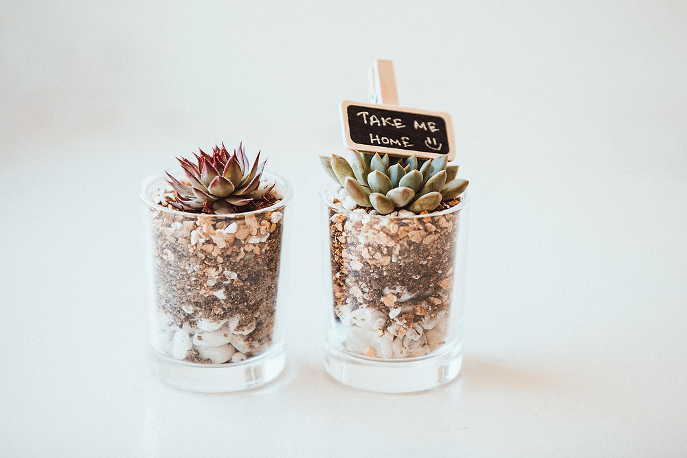 succulents used for eco-friendly wedding favours