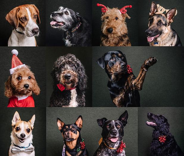 Pop Up Pet Portraits Fundraiser de lumie
