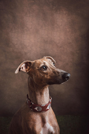 sydney pet photography