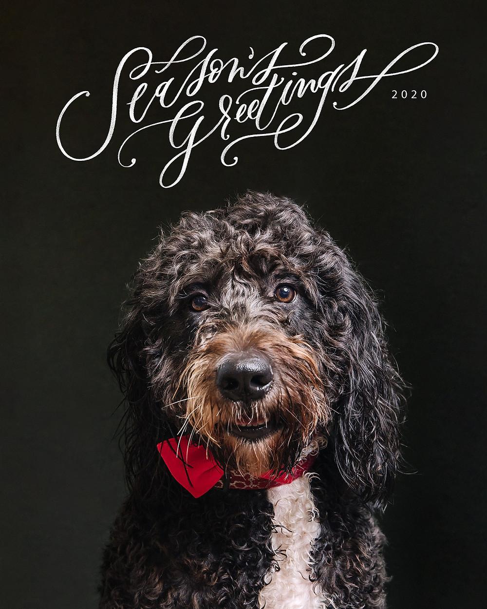 christmas pop-up pet portrait session de lumiere photography