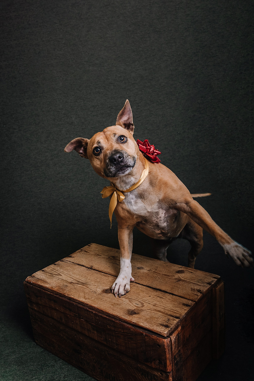 pop-up pet portrait session de lumiere photography