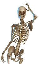 pretty skeleton.jpeg