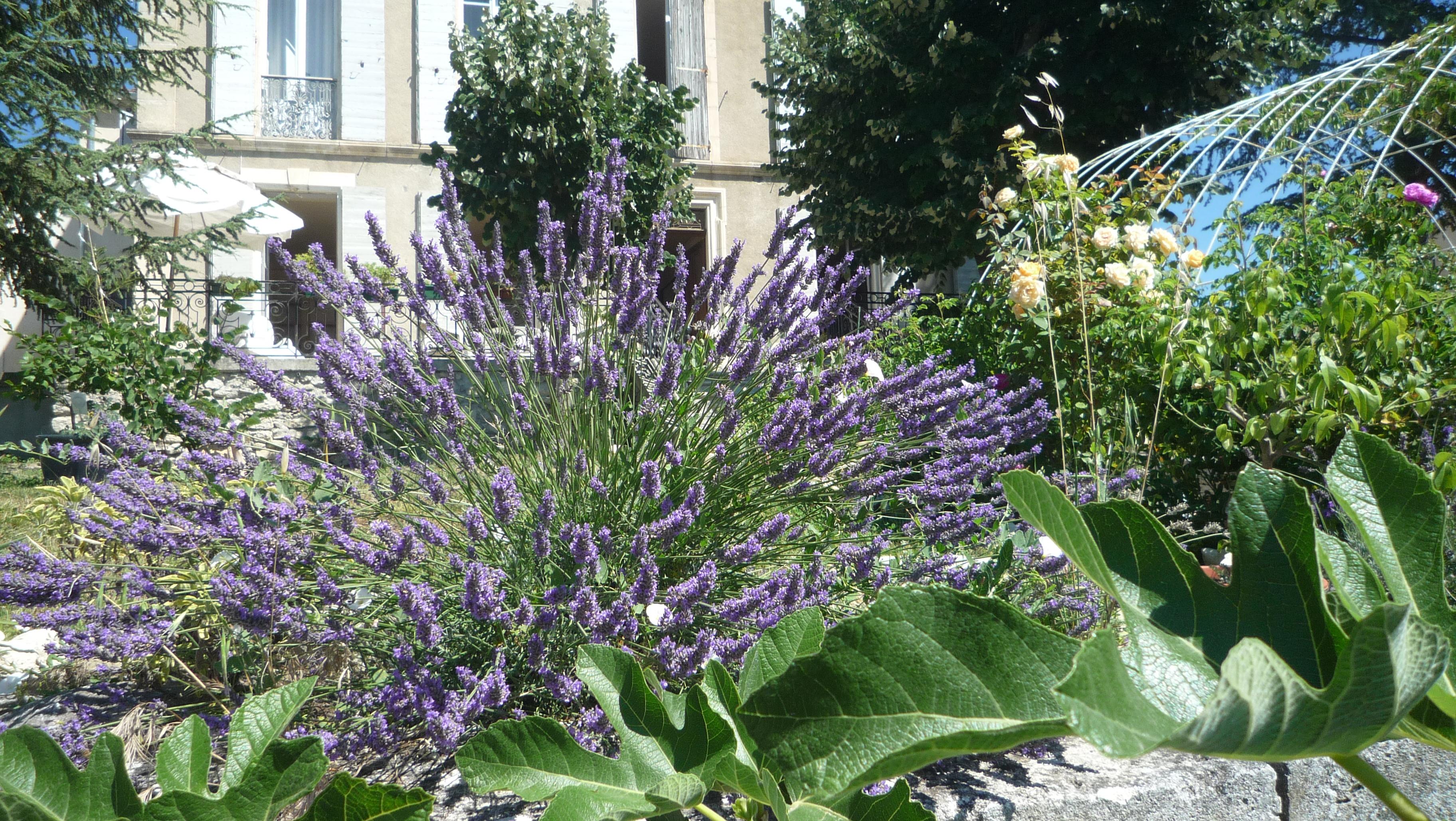 villa of lavender