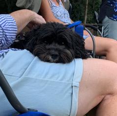 Louie watching cricket