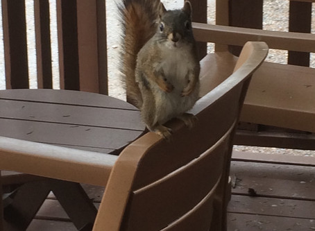 """Did you know that Tuesday 21st January is """"Squirrel Appreciation """"day?"""