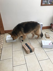 Black and tan dog with boxes