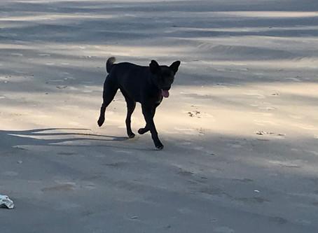 Help my dog has run off!
