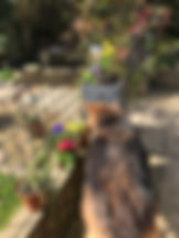 dog by wall.JPG