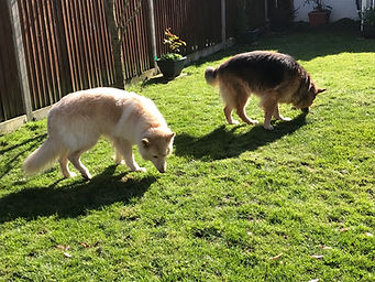 two dogs sniffing.jpeg