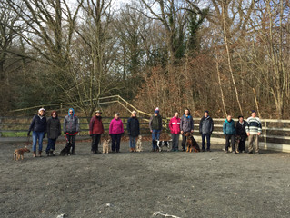 Another off lead and social skills session