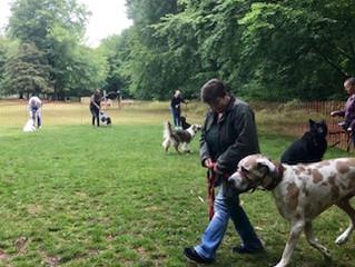 Five Steps to success on a dog walk