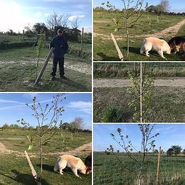 Trees update.jpg