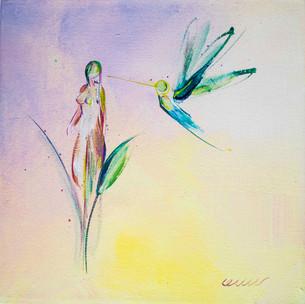 colibri pro.jpg