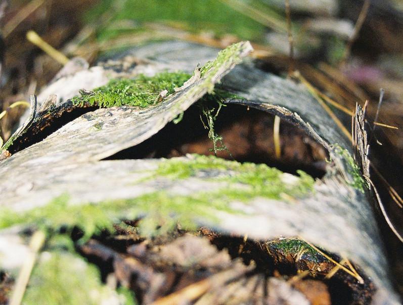Lichen Logs