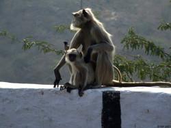 @ Jaipur