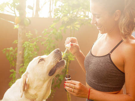 Is CBD oil good for dogs? What is CBD dosage for a dog?