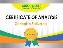 Certificate-Cannabis-SAtiva-sp.jpg