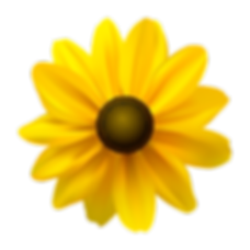 BlackEyedSusan_edited.png