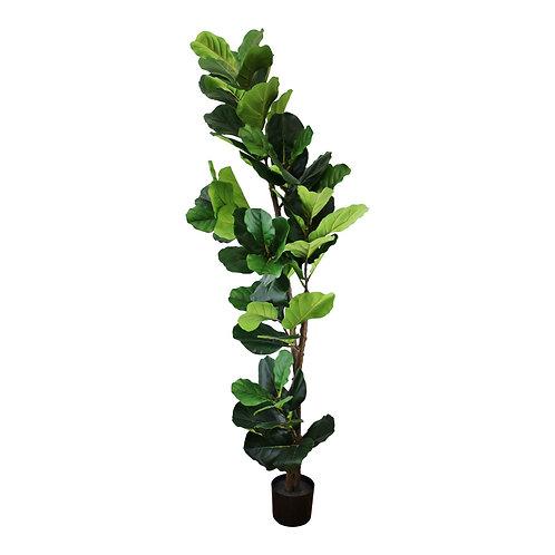 Artificial 180cm Fiddle Fig Plant