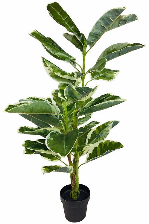 Artificial 110cm Large Leaf Ficus Plant - Premium Range