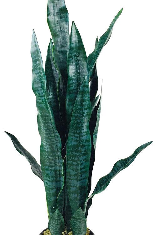 Artificial 90cm Snake Plant
