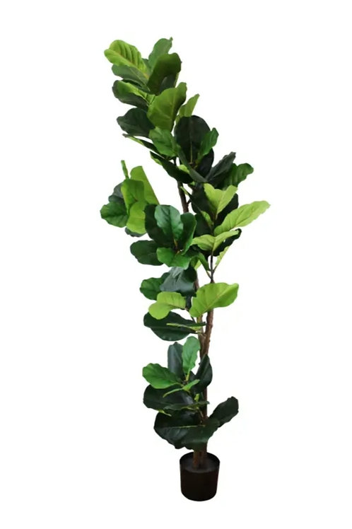 Artificial 180cm Fiddle Fig Leaf Plant