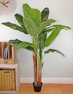 160cm Banana 1