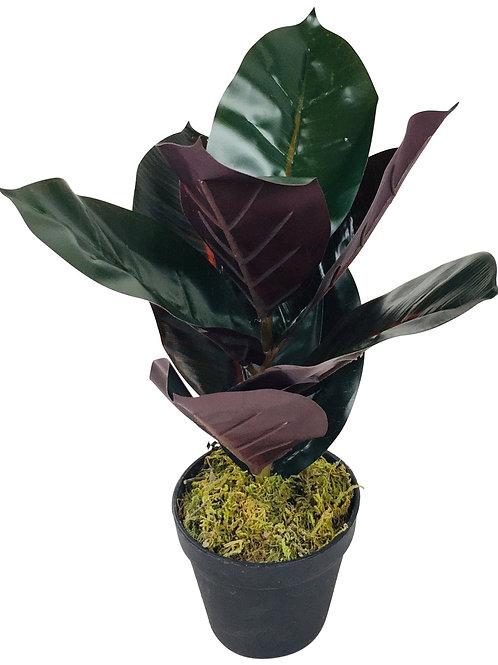 Artificial 40cm Rubber Plant