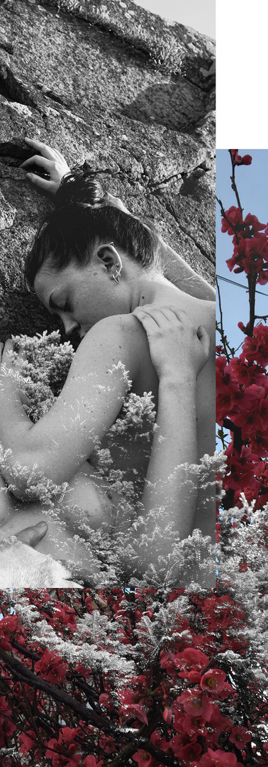 Cordons en fleur
