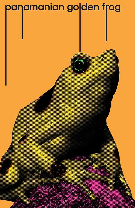 Panima golden frog .png