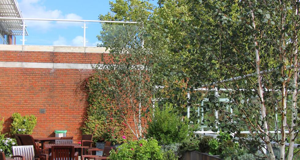 John King Brain Tumour Foundation Garden
