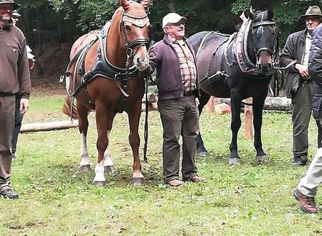 Heinrich Faßbender Zweiter bei den Pfalzmeisterschaften im Holzrücken