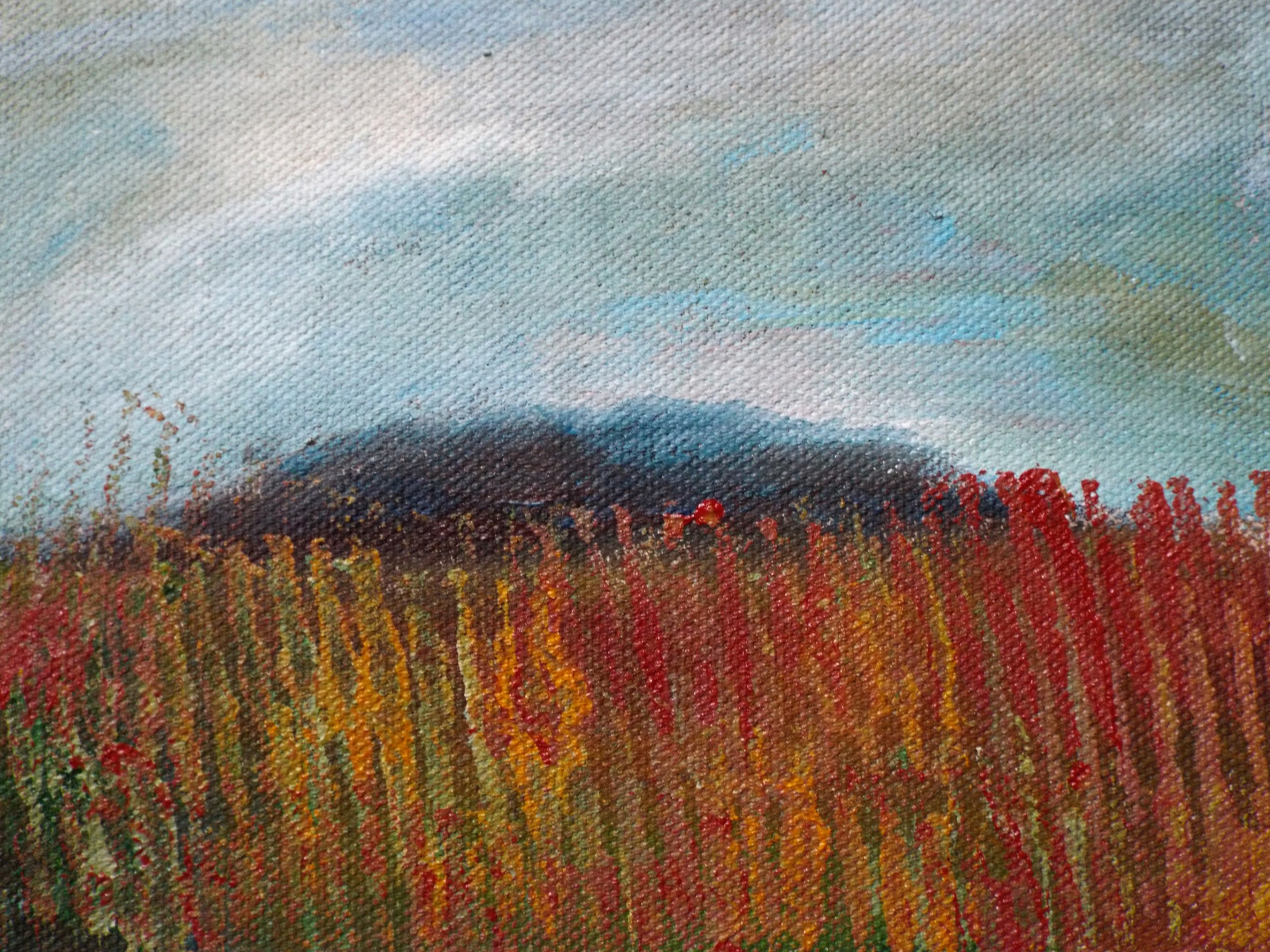 The hill behind the tall grass