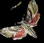 greenmoth_forwebsite.png
