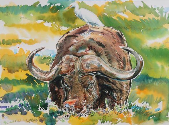 Water Buffalo | Watercolor