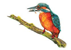 kingfisher piece