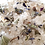 Thumbnail: Fleur Thought - Abundance Bath Brew