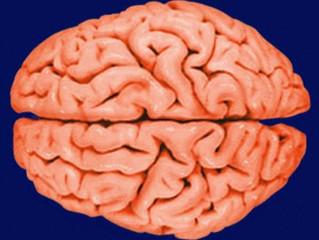 Portuguesa premiada por investigação sobre Alzheimer