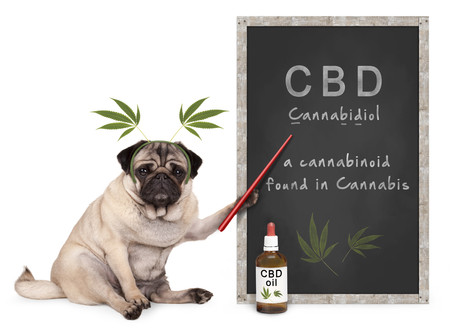 Cannabis and Pet Care